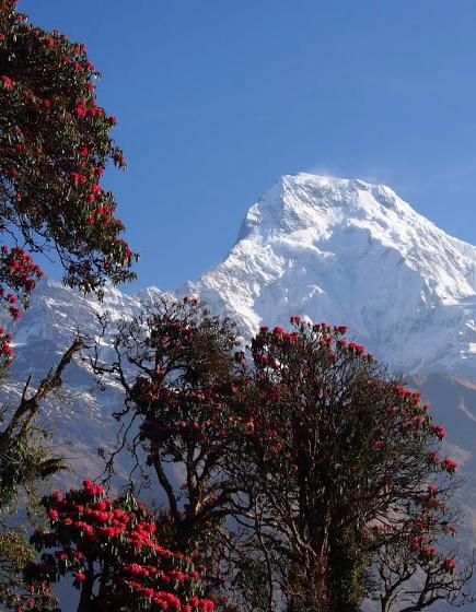 Annapurna Ghorepani Poonhill Trek